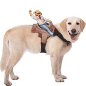 Ride Em Cowboy Dog Costume